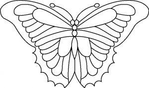 Butterfly 4.